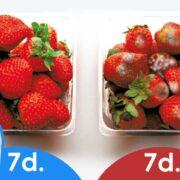4 – vida-10-ozono-fridge-04